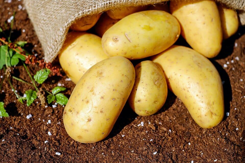 ziemniak polski