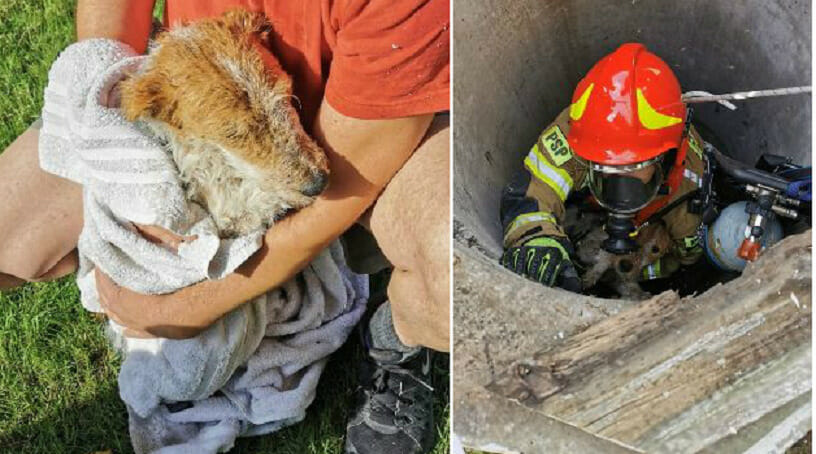 Straż pożarna ratuje psa